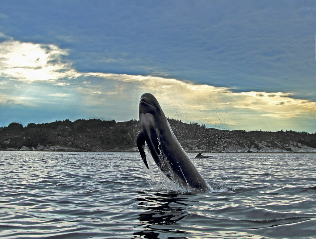 rumpa til munnen gratis vids hval