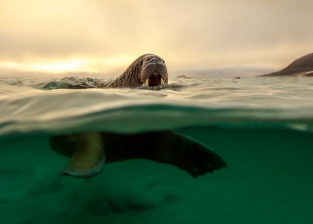 Turistene kommer!, 41 poeng. © Audun Rikardsen