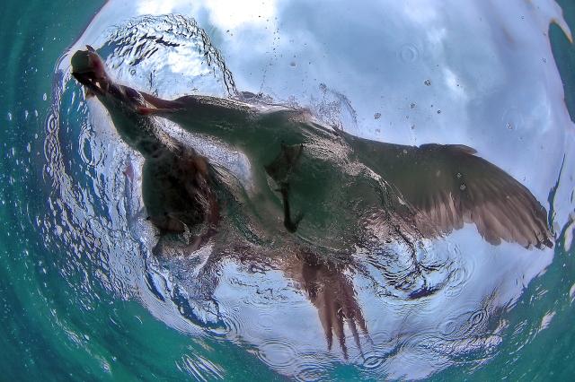 Kjemp for din rett. Gull. © Audun Rikardsen