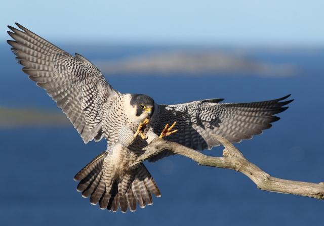 Inn for landing. 42 poeng. © Rune Karlsen