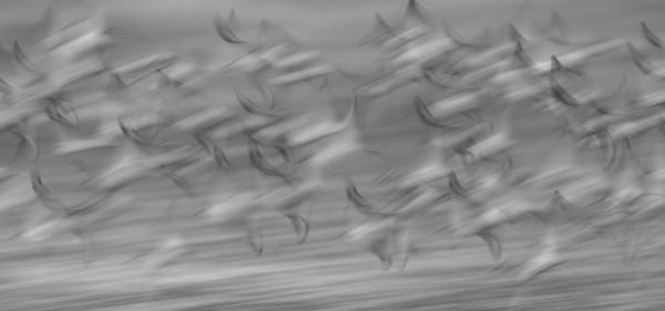 Høsttrekk. Gull. © Thor Jan Salte