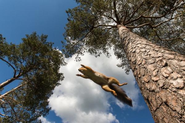 Flygende Ekorn. 40 poeng. © Rolf Selvik