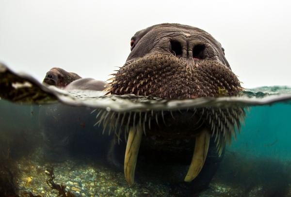 Face-to face - Ansikt til ansikt. Gull. © Audun Rikardsen