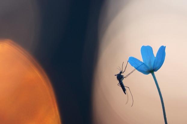 Mygg i solnedgang. 43 poeng. © Magnar Børnes