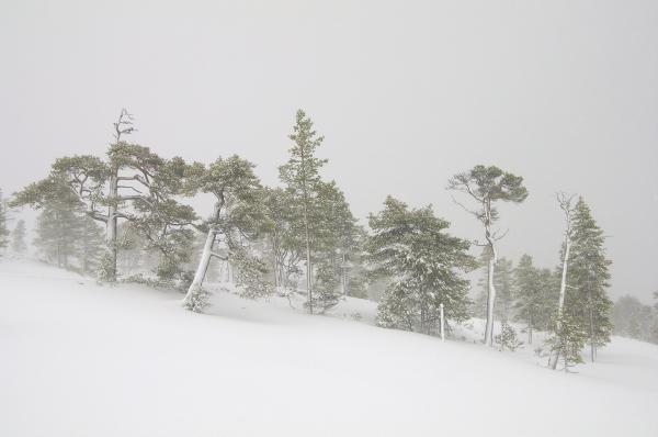 Vinterskog. 42 poeng. © Arne Hugdal