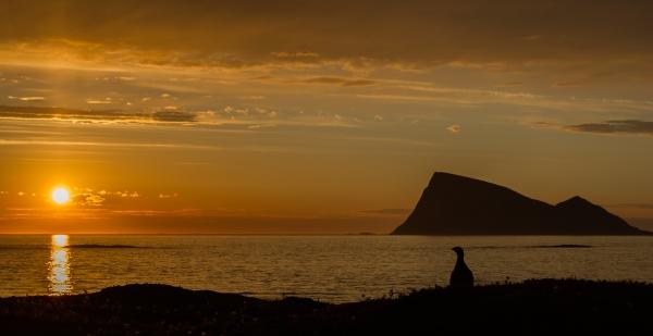 Håjas Vokter. 43 poeng. © Ketil Olsen