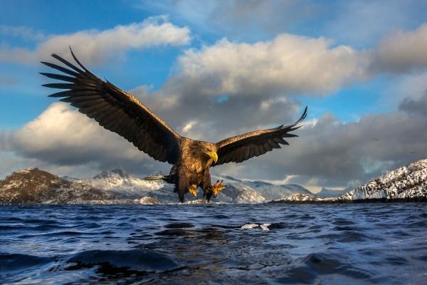 Ørnestup. 42 poeng. © Audun Rikardsen