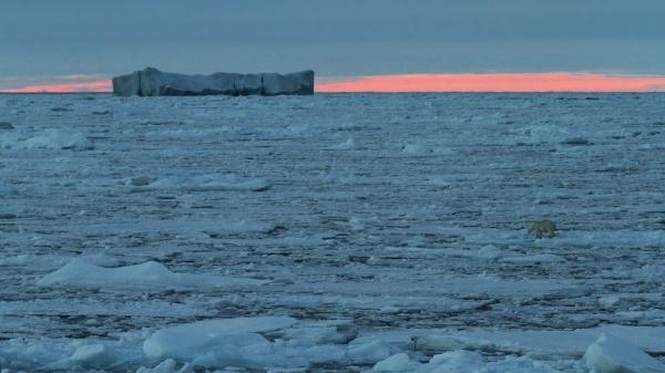 Isbjørn i Polhavet. 42 poeng. © Jørgen Skaug