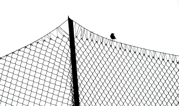 På gjerdet. 41 poeng. © Nils J. Tollefsen