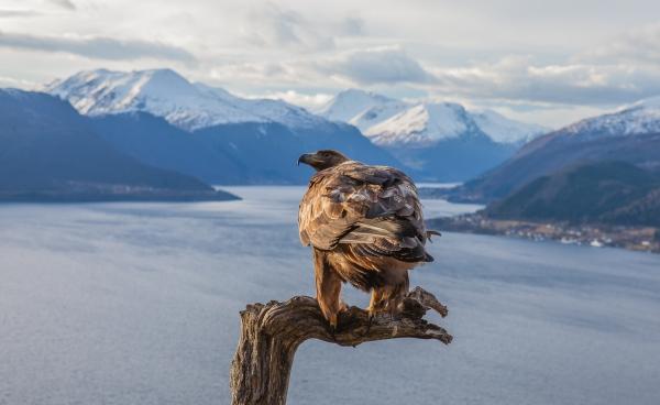 Kongørnas utsikt. 40 poeng. © Kjell Ivar Øye