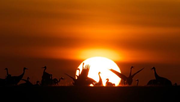 Traner i soloppgang. 40 poeng. © Duy Ahn Pham