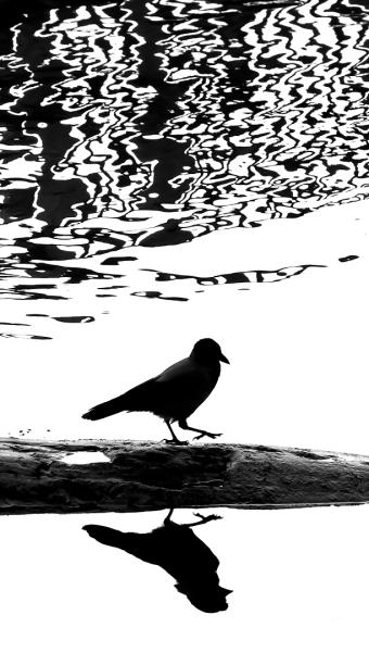 Kråkespeiling. Gull. © Leif Rustand