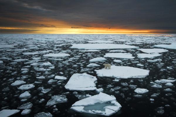 Isbjørn på isflak. 39 poeng. © Jørgen Skaug