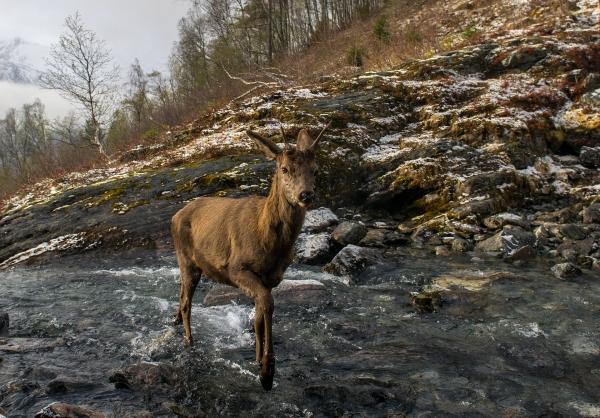 Hjort. 40 poeng. © Vegard Lødøen