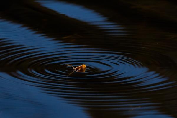 Stor vårflue på vannet. 43 poeng.  © Vidar Lunde