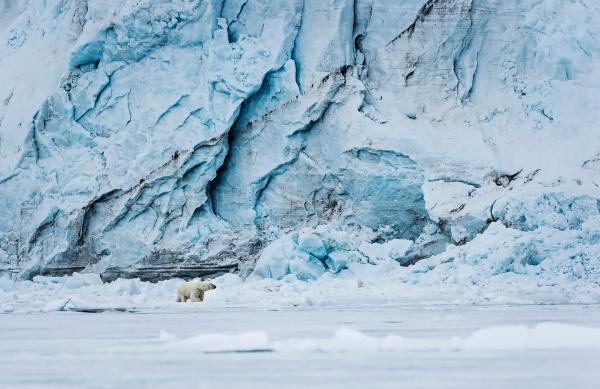 Isbjørn og blåis. 44 poeng.  © Jan R Olsen