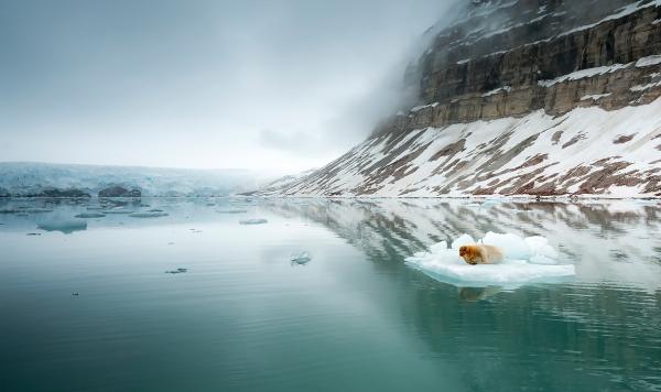 Storkobbe. Gull.  © Jan R. Olsen