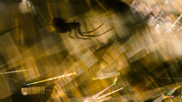 Abstrakt Edderkopp. 43 poeng.  © Kolbein Svensson