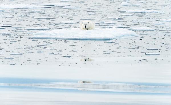 Isbjørnspeiling. 41 poeng.  © Jan R. Olsen