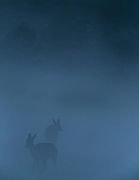 Hjort i blå tåke. 40 poeng. © Bernt Østhus
