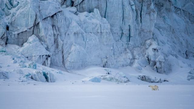 Beyer4_Isbjørniforhold tilgletscher