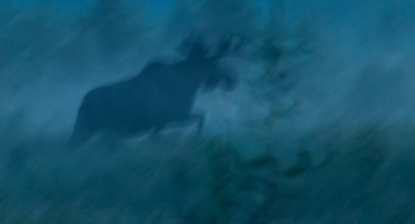 Nattens Konge. Gull. © Laila Fredhjem