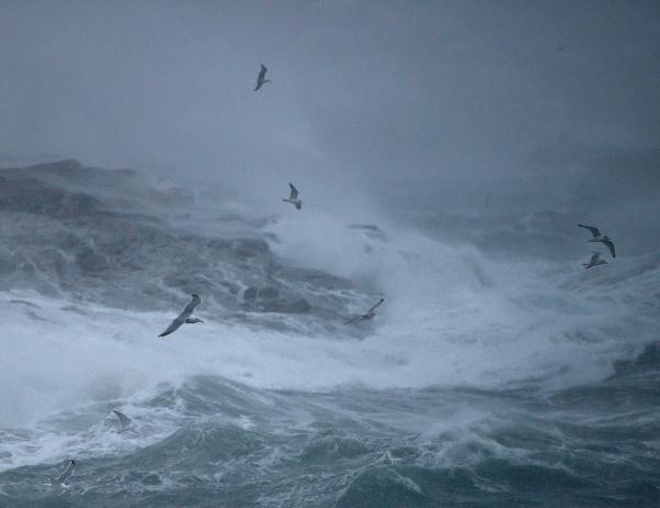 Stormfugler. 434 poeng. © Ebba Jenssen