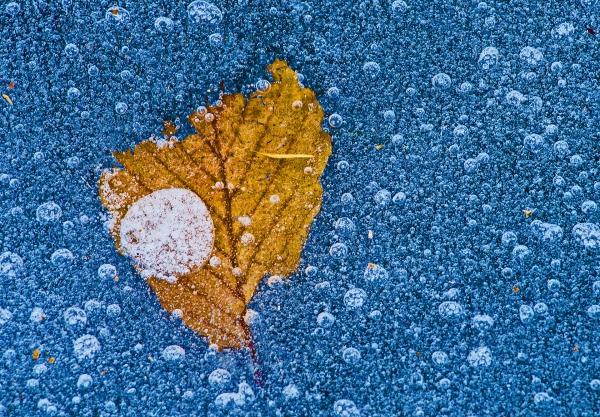 Høstblad. 35 poeng. © Nils J. Tollefsen