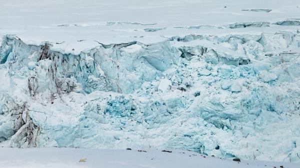 Isbjørn og breen.  41 poeng.  © Duy Ahn Pham