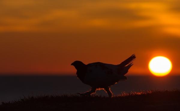 Ute ved kysten. 44 poeng. © Ketil Olsen