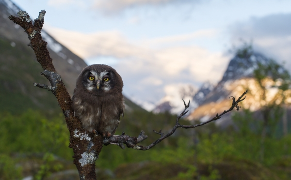 Ung perleugle i miljø. 44 poeng. © Ketil Olsen