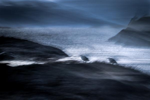 Hegrer i nordavind før soloppgang. 43 poeng. © Torleif Hansen