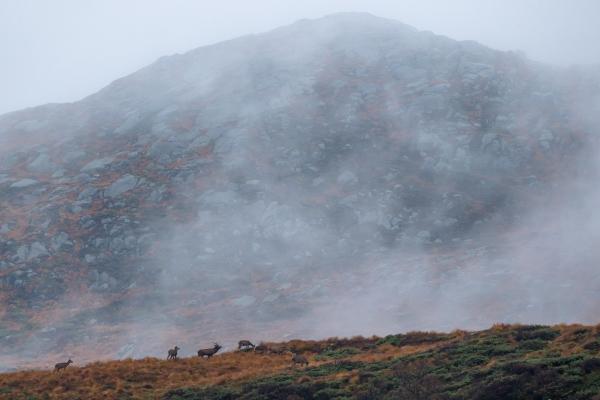 Hjorter i høyfjell. 42 poeng. © Rolf Selvik