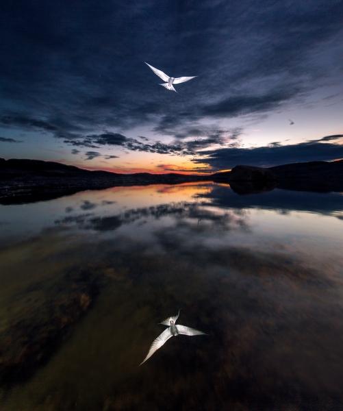 Midnattsrefleksjon. Gull. © Audun Rikardsen