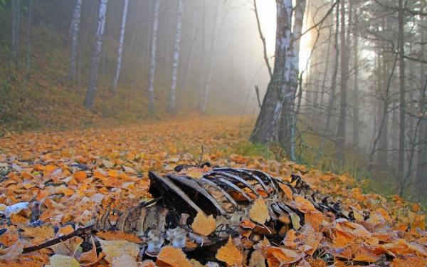 Døden i tåkeskogen. Gull. © Egil Skredemellom