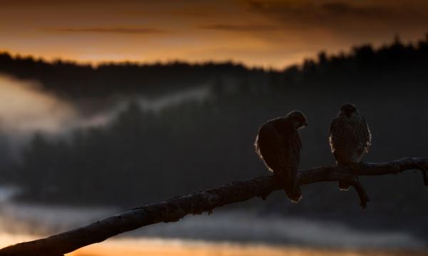 Sommernatt i vandrefalkfjellet. 43 poeng. © Bjørn Aksel Bjerke
