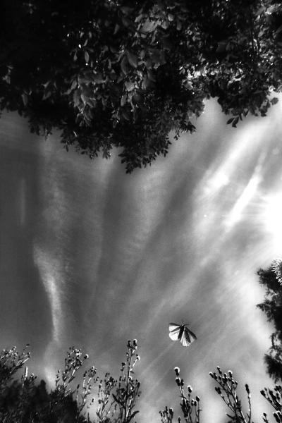 Sommerfuglflukt. 42 poeng. © Leif Rustand