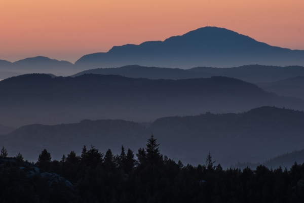 Morgenlys. Gull. © Nils J Tollefsen