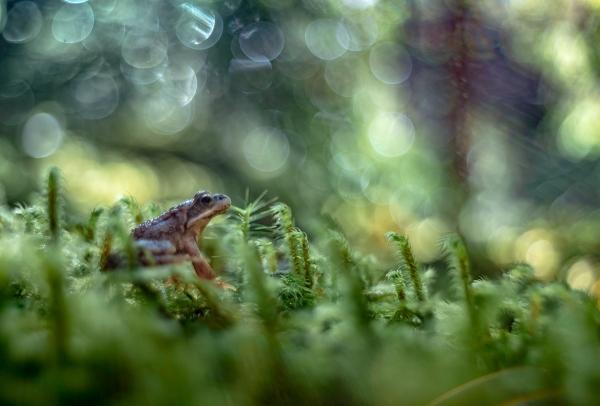 Frosk. 44 poeng. © Sylwia Grabinska