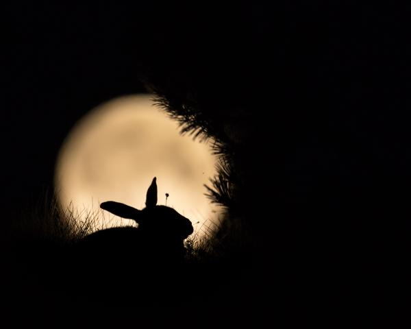 Pus i månen. 44 poeng. © Torleif Hansen
