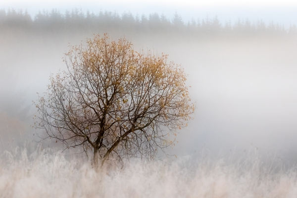 Selje i frostrøyk. 44 poeng. © Torleif Hansen