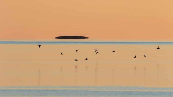Siland i hildringstimen. Gull. © Torleif hansen