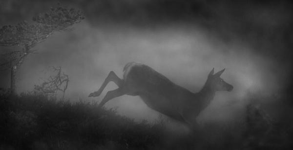 Trollhjort. Gull. © Bernt Østhus