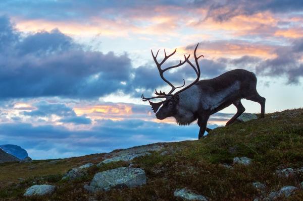 Rein. Gull - 51,2 poeng. © Vegard Lødøen