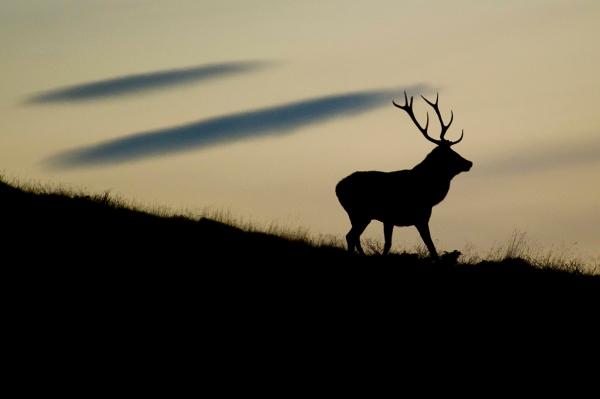 Kongen på haugen. 42 poeng. © Terje Sylte