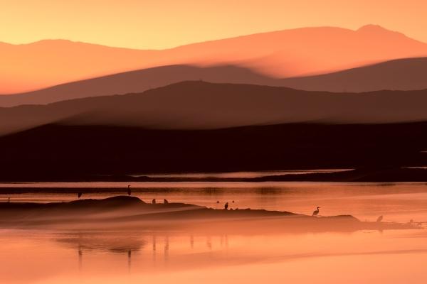 Hegremorgen. Gull. © Torleif Hansen